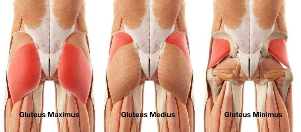 Anatomi otot bokong - Glutes