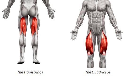 Otot Paha - Quadricep dan Hamstring
