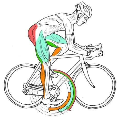 Otot yang dipakai pada putaran pedal